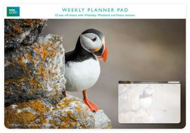 Planer tygodniowy Puffin